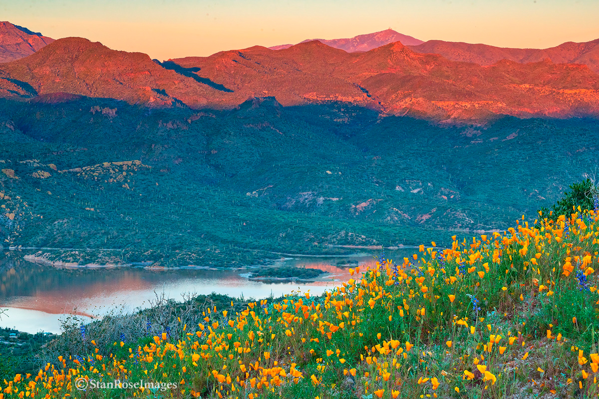 Spring wildflowers at sunset at Bartlett Lake.