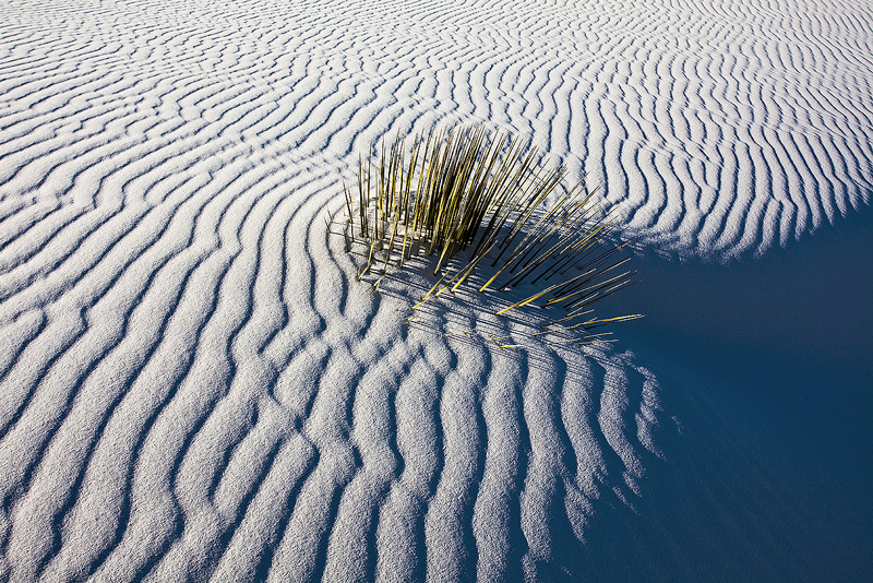 Life strugles in the sand dunes.