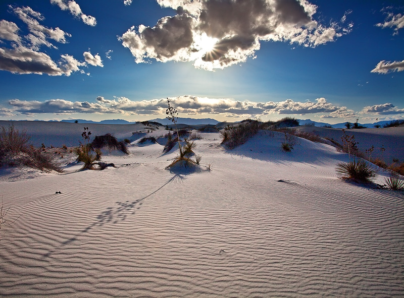 Afternoon yucca at White Sands.