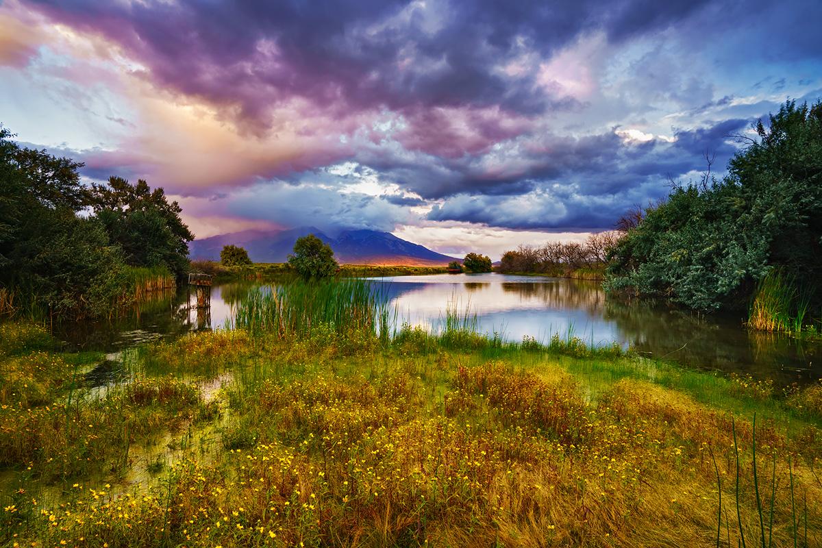 blanca wetlands, san luis valley, colorado, sunset, wildflowers