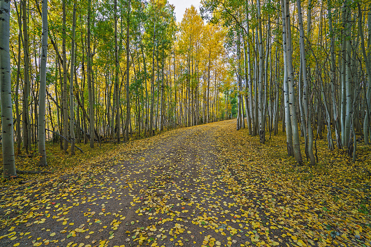 autumn,buffalo pass,road, photo