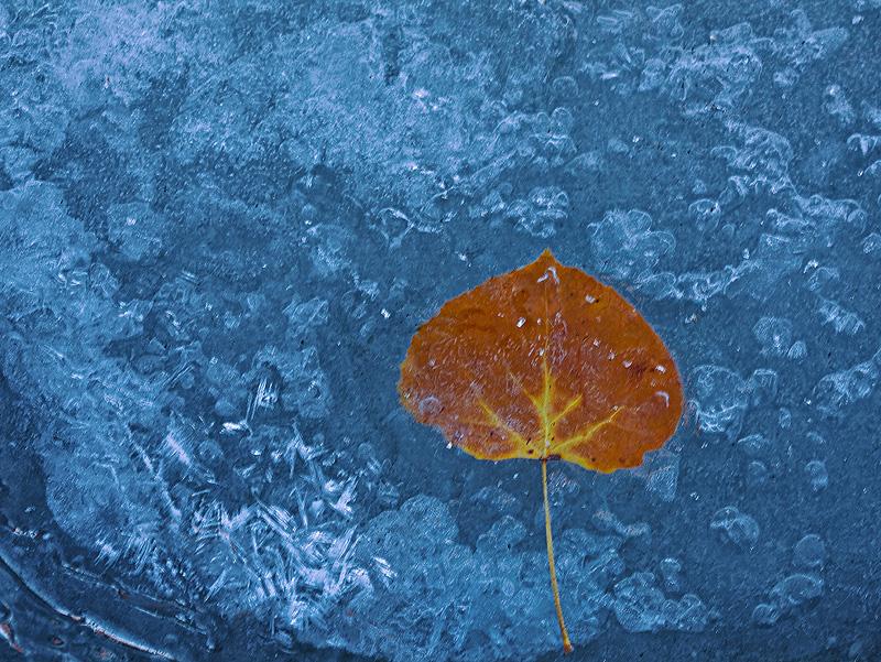 aspen,leaf,green mountain falls,colorado, photo