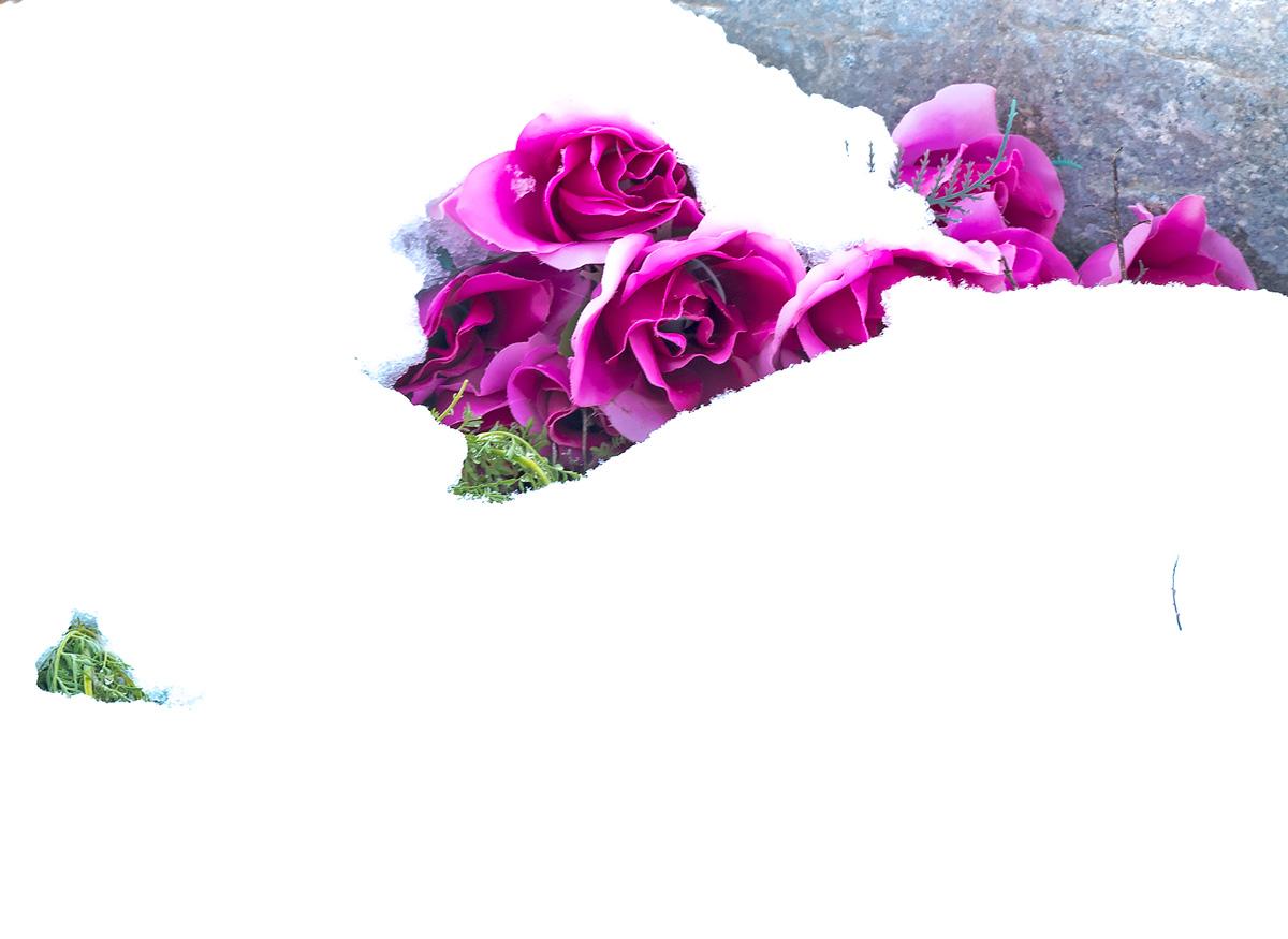 flowers, colorado, photo