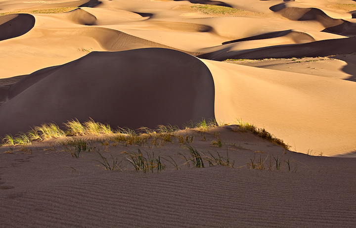 Great Sand Dunes,Colorado,grasses, photo