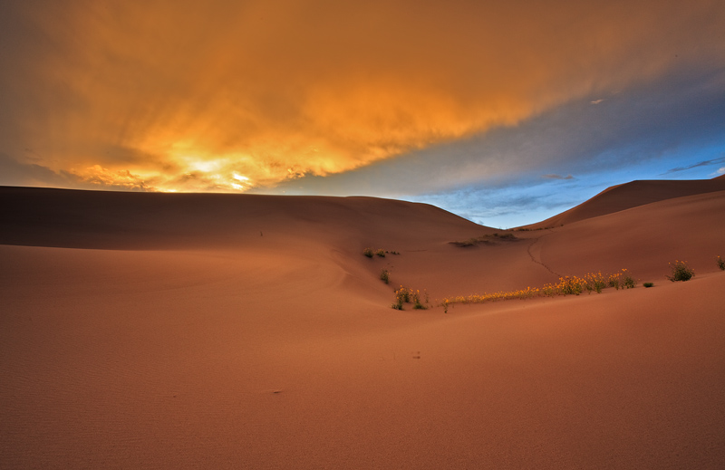 sunflower,great sand dunes,colorado,sunset