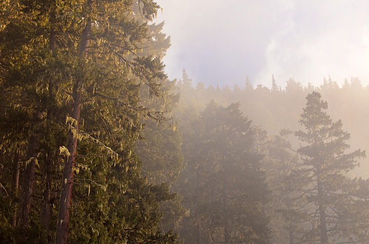 Heart of the hills,olympic national park,fog, photo