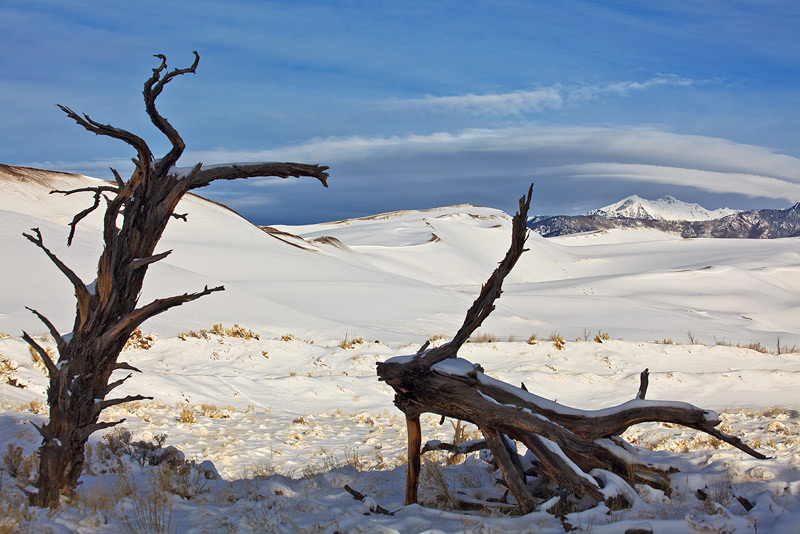 Dead trees at Escape Dunes in December.