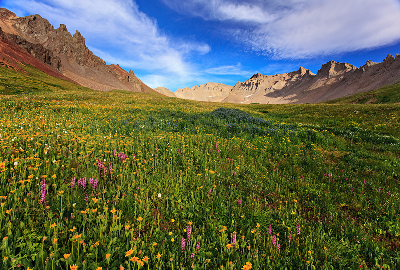Porphyry,wildflowers,San Juan Mountains,Colorado, photo