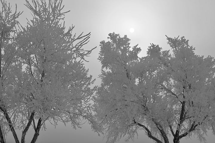 fog,Lake Pueblo,Colorado,tree, photo