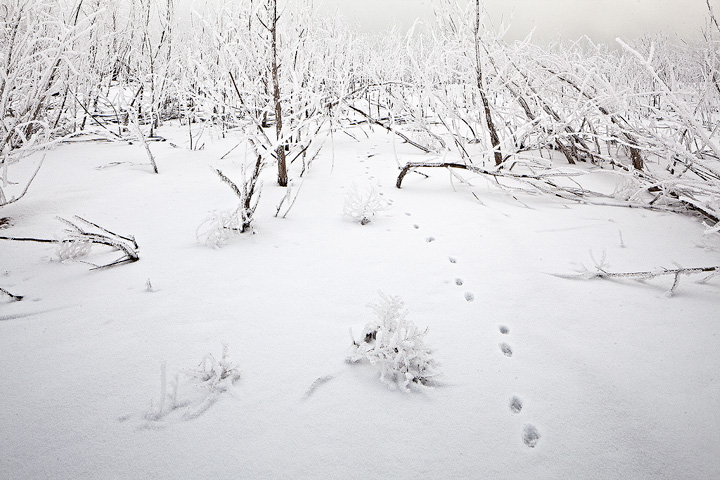 fox,animal,Lake Pueblo,Colorado,tracks, photo