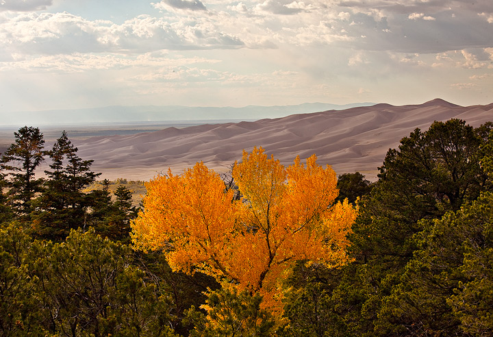 fall colors,great sand dunes,colorado, photo