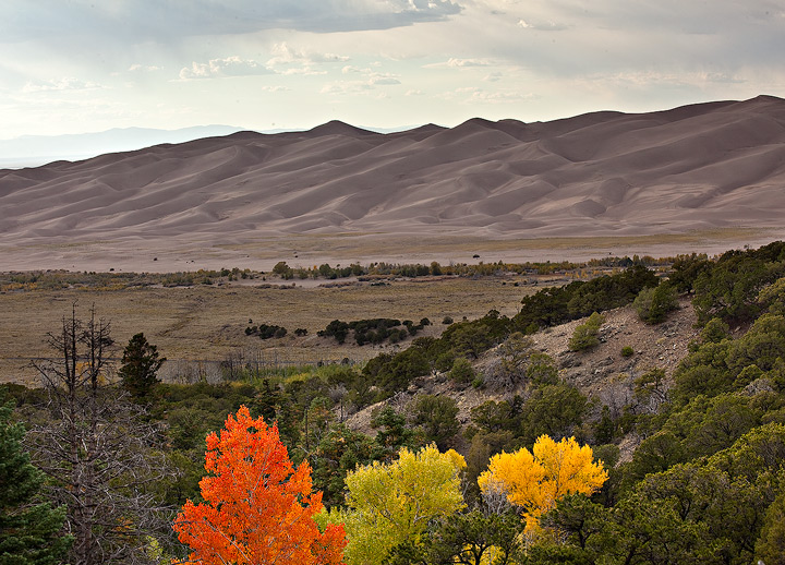 great sand dunes,colorado,trees, photo