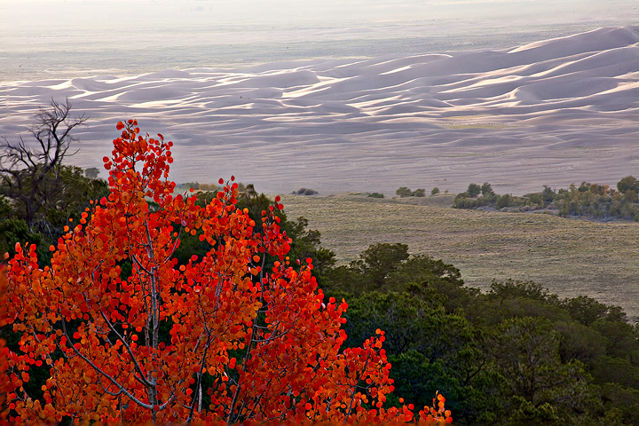 red aspen,sunset,great sand dunes,colorado, photo