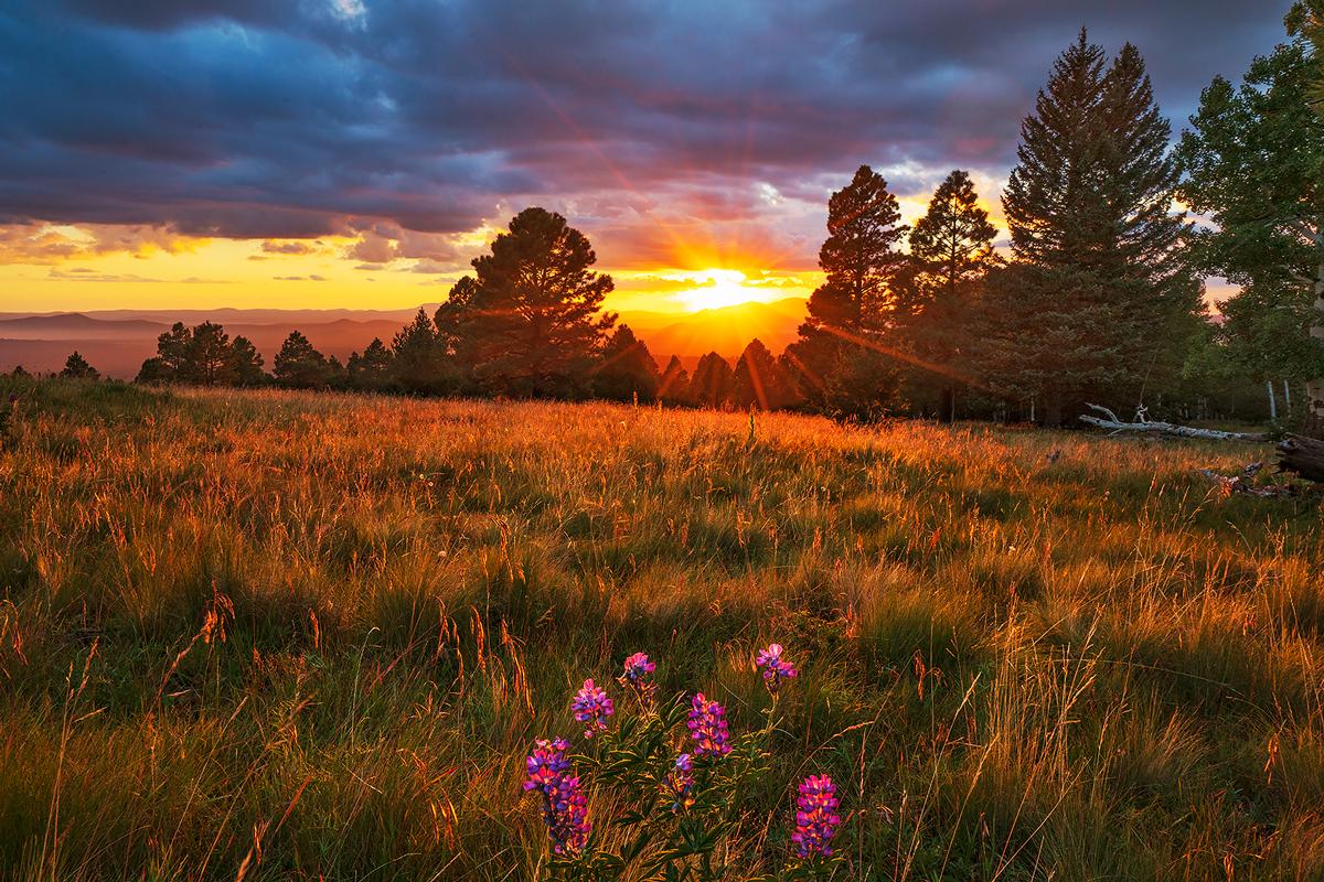 Arizona Snowbowl, sunset, flagstaff, Arizona, lupine, photo