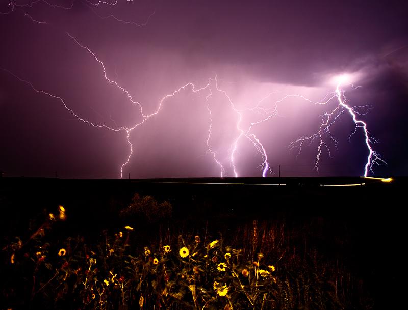 lightning,sunflowers, photo