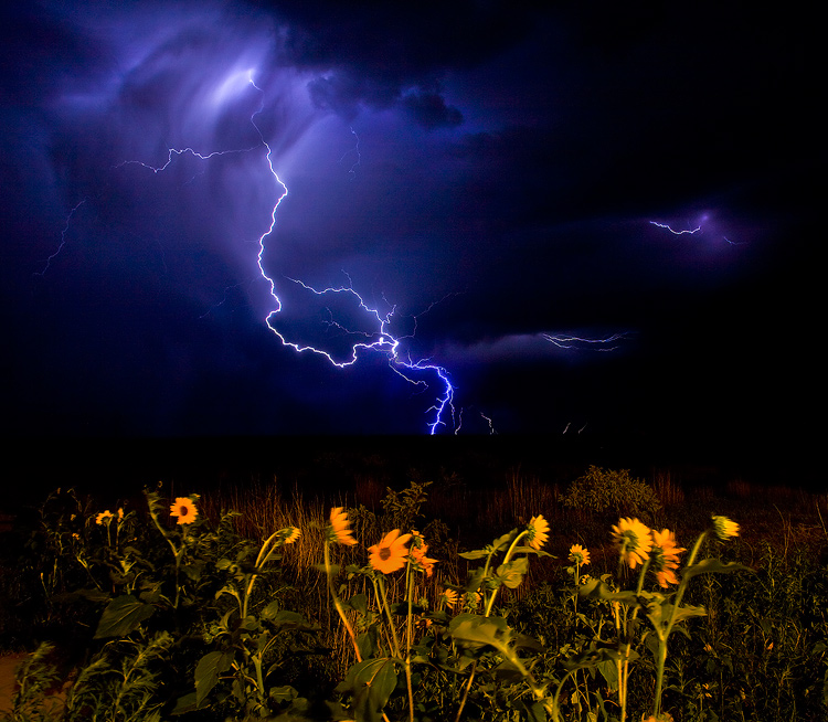 thunderstorm,lightning,sunflower, photo