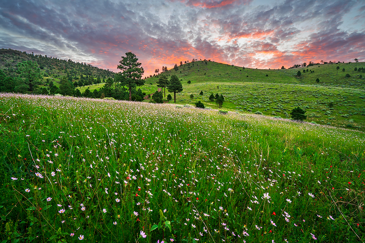 Sunset Crater, wildflowers, meadows, photo
