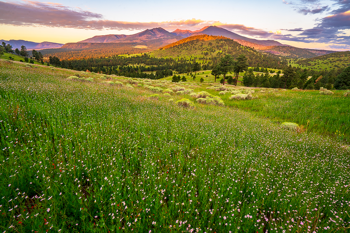 Sunrise from Sunset Crater National Monument as wildflowers explode in the meadows.