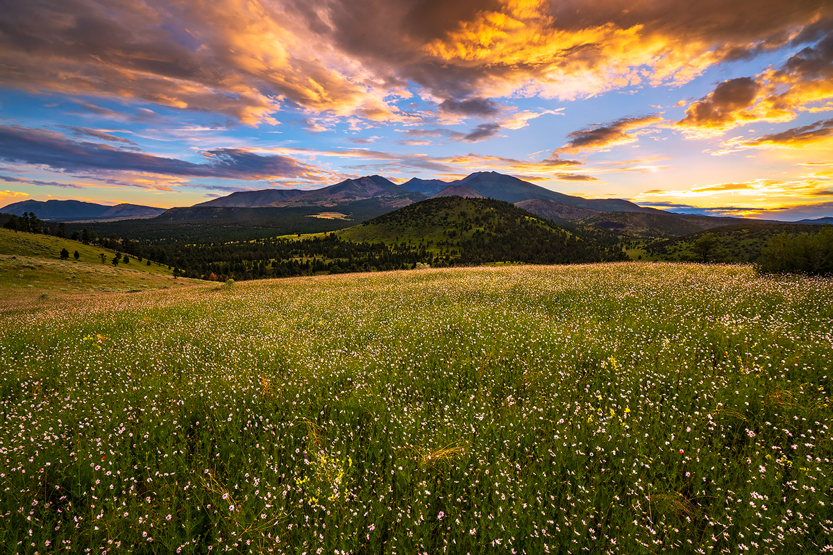 wildflowers, Flagstaff, Sunset Crater, meadows, arizona, photo