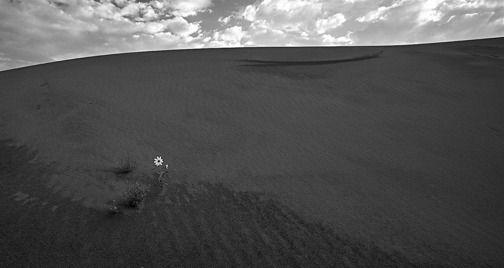 sunflower,great sand dunes, photo