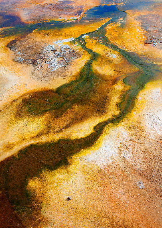 Yellowstone,geyser,Wyoming, photo