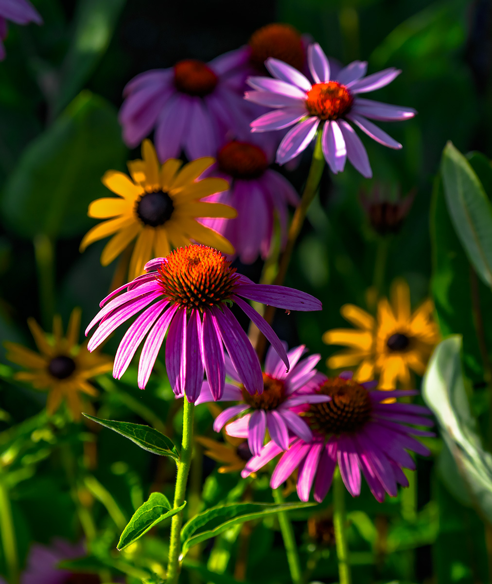 flowers, xeriscape, Colorado Springs, photo